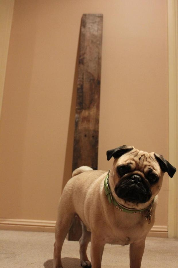 Rustic photo board dog Treats a la Bark pug